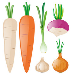 carrots and other root vegetables vector image