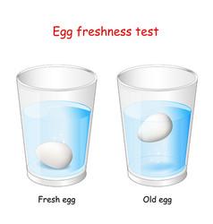 Egg freshness test vector