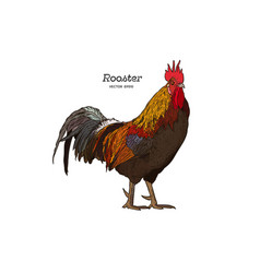 Hand drawn rooster isolated engraved style vector