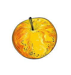 hand drawn sketch apple in color isolated on vector image