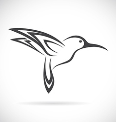 Humming birds vector