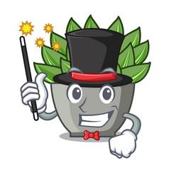 Magician cartoon echeveria cactus in cactus garden vector