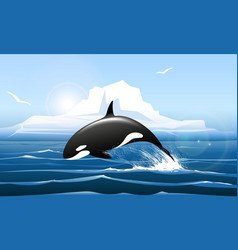 Orca or killer whale jumps out water vector