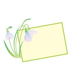 snowdrop flower frame vector image