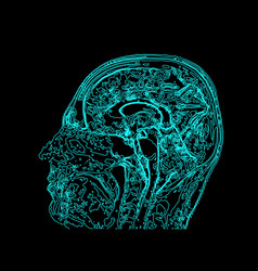 topographic map mri of the human brain vector image