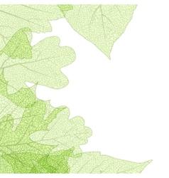 Leaf skeletons autumn tenplate EPS 10 vector image
