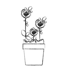 blurred silhouette flowered roses planted with vector image