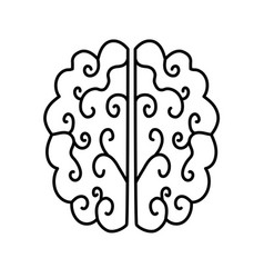brain illutration vector image