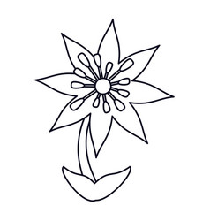 Plumeria flower decoration line vector