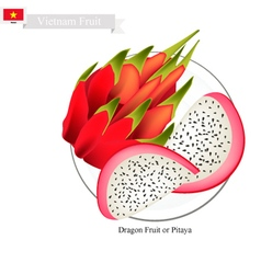 Dragon Fruit A Famous Fruit in Vietnam vector image vector image
