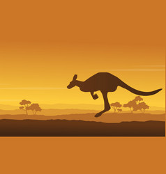 kangaroo beauty scenery in the hill vector image vector image
