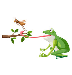 a frog try to eat grasshopper vector image