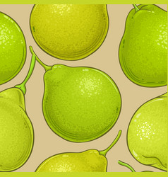 bergamot fruit pattern on color background vector image