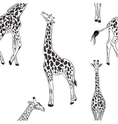 Giraffe seamless black white pattern african vector