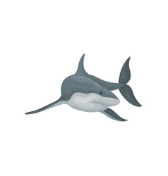 shark swimming sea animal fish vector image
