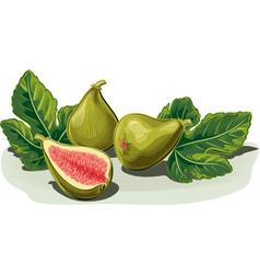 Three ripe figs one half opened vector