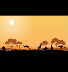 beauty kangaroo on park scenery silhouettes vector image vector image