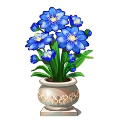 Bright blue flowers in beautiful ceramic pot vector image