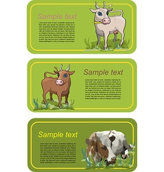 Cow Card Set vector image