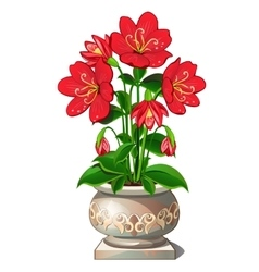 Bright red flowers in beautiful ceramic pot vector image