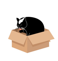 cute big cat licking a paw in a small cardboard vector image
