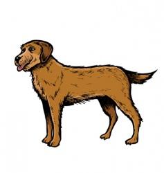 English setter dog vector
