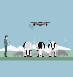 Farmer with drone counts cows vector
