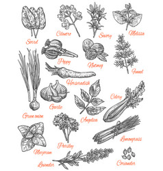 Spices store sketch icons of herbs vector