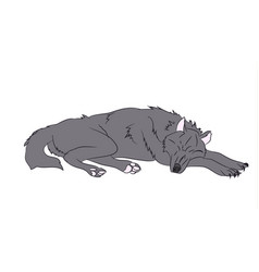 wolf asleep color vector image