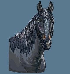 Colorful hand drawing horse portrait-9 vector