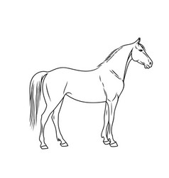 elegant horse done in a minimal style vector image