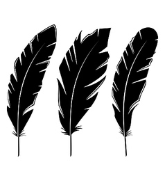 Set feathers isolated on white background vector image