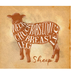 Sheep lamb cutting scheme craft vector