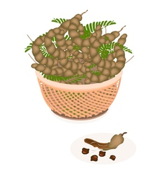 A Brown Basket of Fresh Tamarind Pod and Leaves vector image vector image