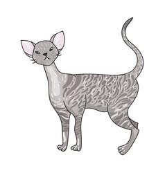 Cornish rex icon in cartoon style isolated on vector