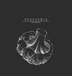 hand drawn broccoli vector image