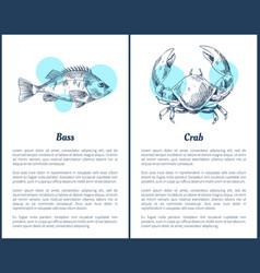hand drawn decorative sea bass and crab icons vector image