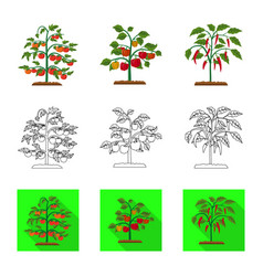 Isolated object of greenhouse and plant logo vector