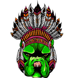 pitbull dog head with indian hat vector image