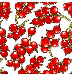 red currant berries patten vector image