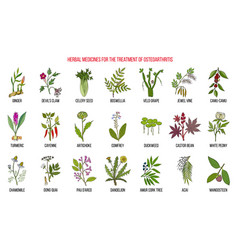 Best herbal remedies for osteoarthritis vector