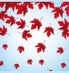 falling red maple leaves background vector image