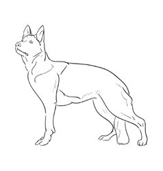 Hand drawn German Shepherd dog Sketch vector image
