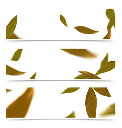 orange falling autumn leaves web banner flyer vector image