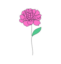 peony flower on white vector image