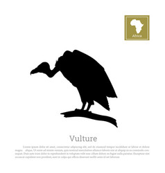 black silhouette of a vulture on white background vector image vector image