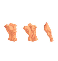 Body parts with torso and muscled leg set vector