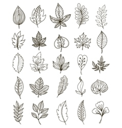 Hand Drawn Foliage Monochrome Set vector