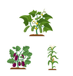 isolated object of greenhouse and plant logo set vector image
