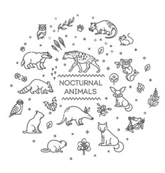 set linear nocturnal animals vector image